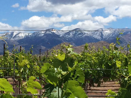 White-capped mountains in the distance at the LDV Vineyard