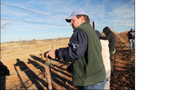 Curt Dunham pruning vines at LDV Vineyard