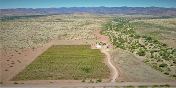 LDV Winery Vineyards in Pearce, AZ